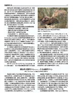 Chinese_Issue_7_Part2