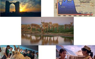 Экранларымызда жыллар дауамында Устирт кенликлеринде Сайгаклар хам адамлар арасында тыгыз байланыста жасаганлыгы хаккында Устирт сайгаклары жасауга хакылы атамасында жана хужжетли фильм шыгарылмакта