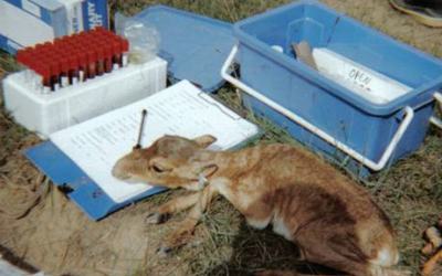 Saiga-based PhD Opportunity at the University of Bristol